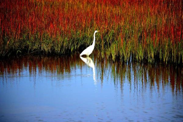 Photograph - Egret Looking For Lizards by Cynthia Guinn
