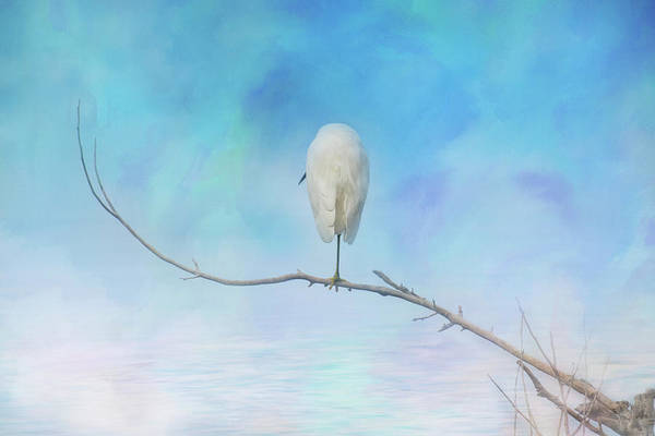 Photograph - Egret On A Branch by Gloria Anderson