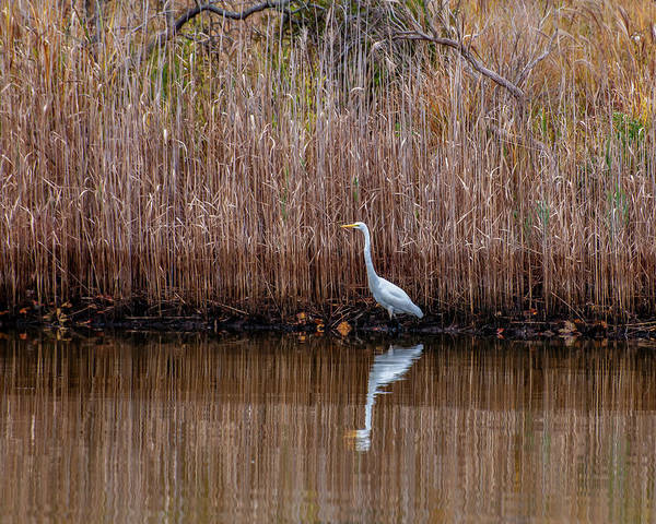 Photograph - Egret Reflection 5831 by Cathy Kovarik