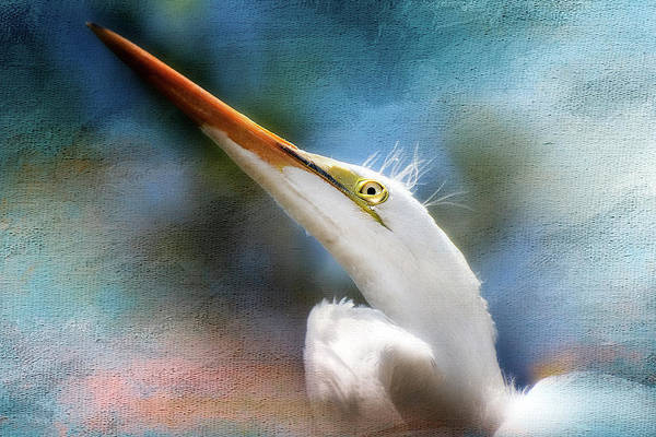 Herron Photograph - Egret by Tim Palmer