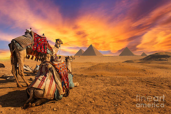 Exterior Wall Art - Photograph - Egypt. Cairo - Giza. General View Of by Kanuman