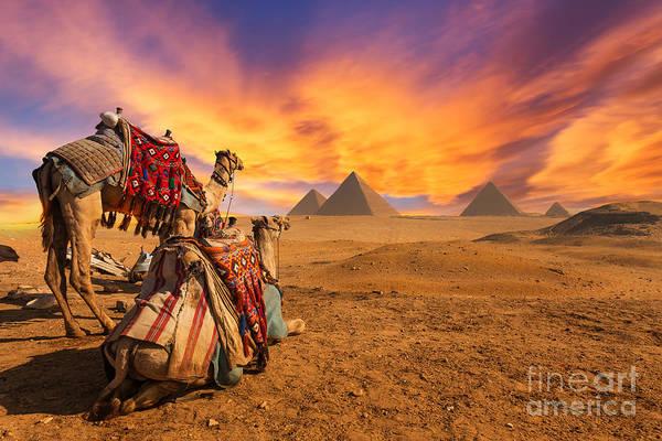 Egypt. Cairo - Giza. General View Of Art Print