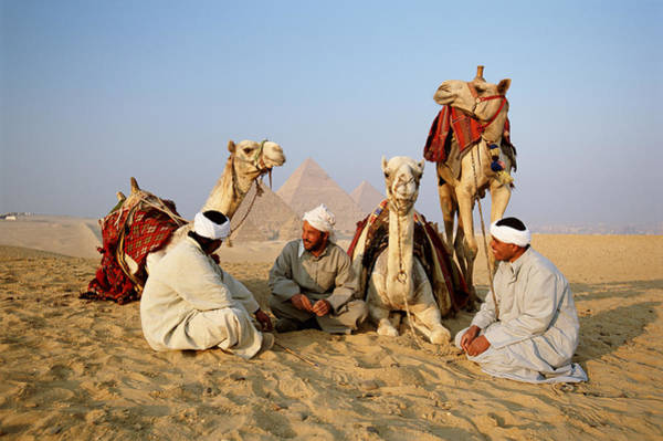 Wall Art - Photograph - Egypt, Giza, Camel Drivers Having Rest by Frans Lemmens