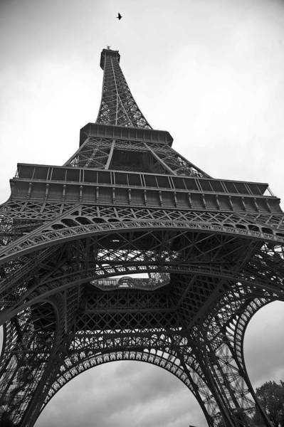 Animal Place Photograph - Eiffel Tower by Hilary Brodey