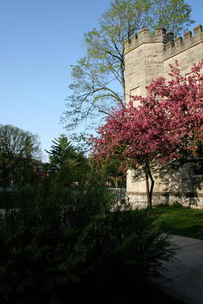 Photograph - Eiu Spring Old Main by Dylan Punke