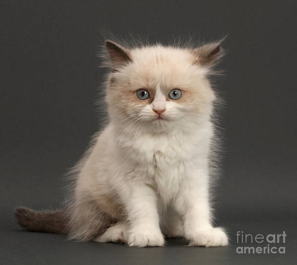 Photograph - Electric Kitten by Warren Photographic