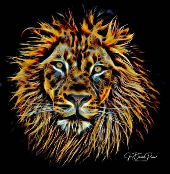 Photograph - Electric Lion by David Pine