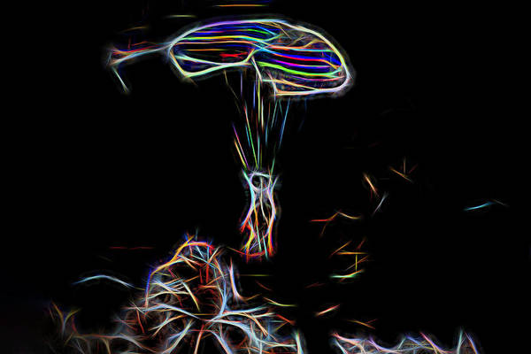 Photograph - Electric Parachute by Kay Brewer