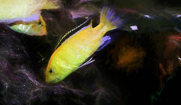 Digital Art - Electric Yellow Cichlid Chalk Art by Don Northup