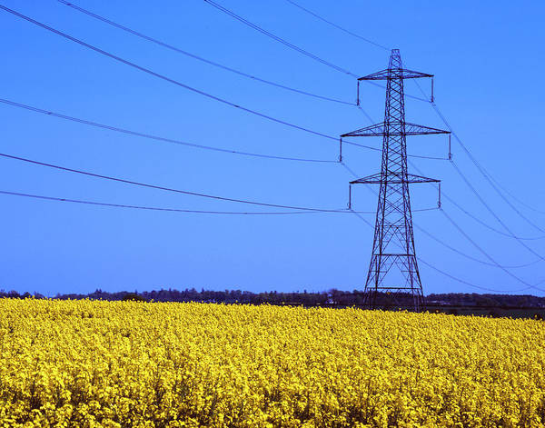 Electricity Generation Photograph - Electricity Pylon And Field Of Oil Seed by Malcolm Fife