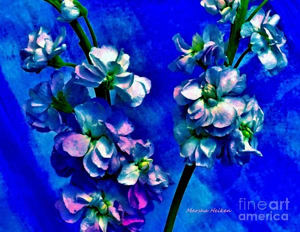Wall Art - Digital Art - Elegant Colored Flowers by Marsha Heiken