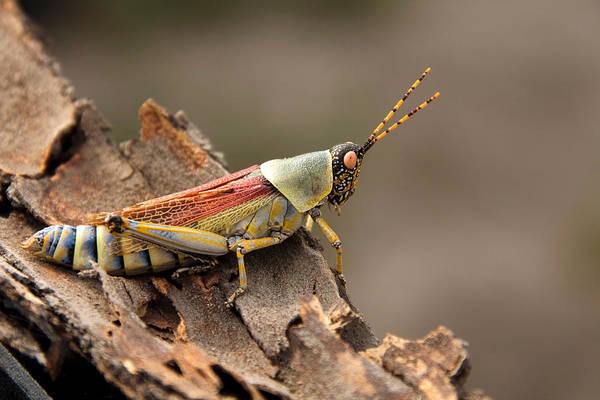 Wall Art - Photograph - Elegant Grasshopper by David Hosking
