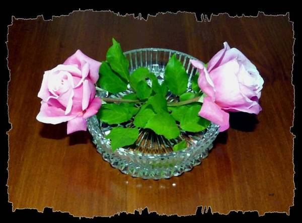 Border Mixed Media - Elegant Pink Roses by Will Borden