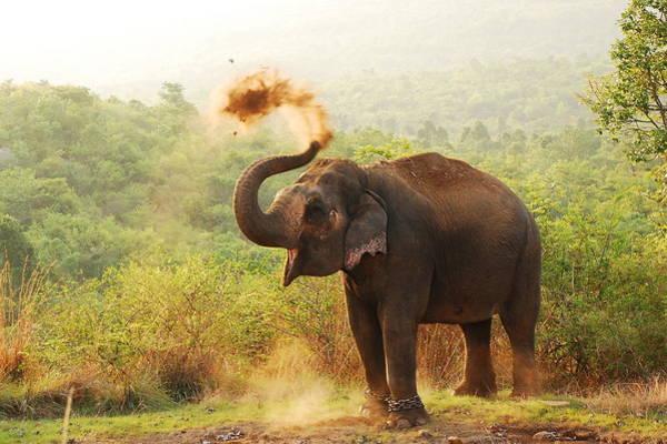 Bangalore Photograph - Elephant by Aditi Das Patnaik