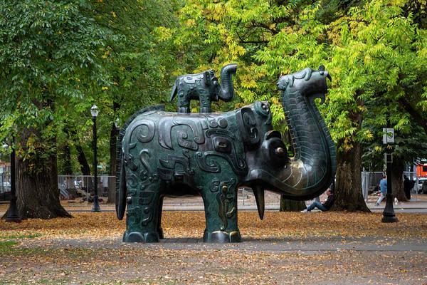 Photograph - Elephant Among Us by Steven Clark