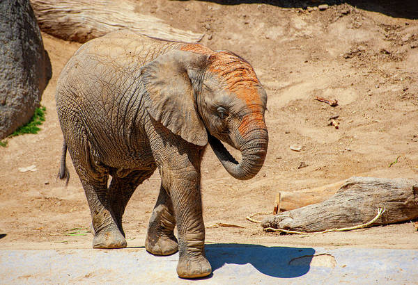 Wall Art - Photograph - Elephant Baby by Anthony Jones