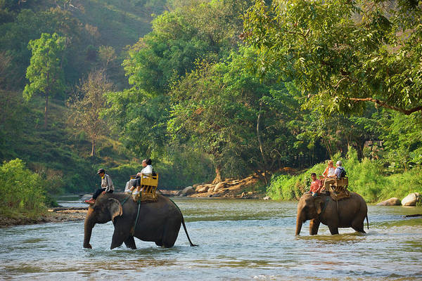 Chiang Mai Province Photograph - Elephant Camp Near Chiang Dao by Jean-pierre Lescourret