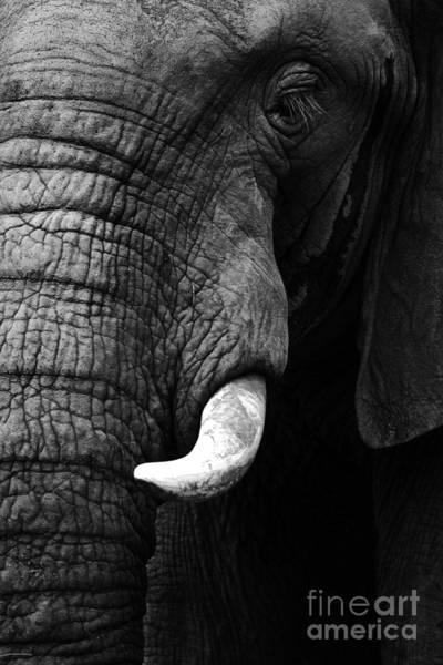 Wall Art - Photograph - Elephant Close Up by Donovan Van Staden