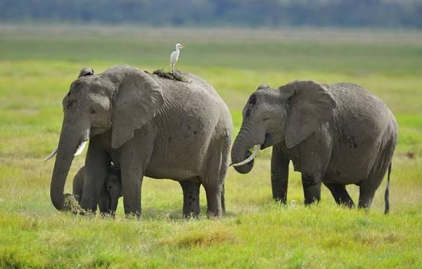 Photograph - Elephant Family by Diana Robinson Photography