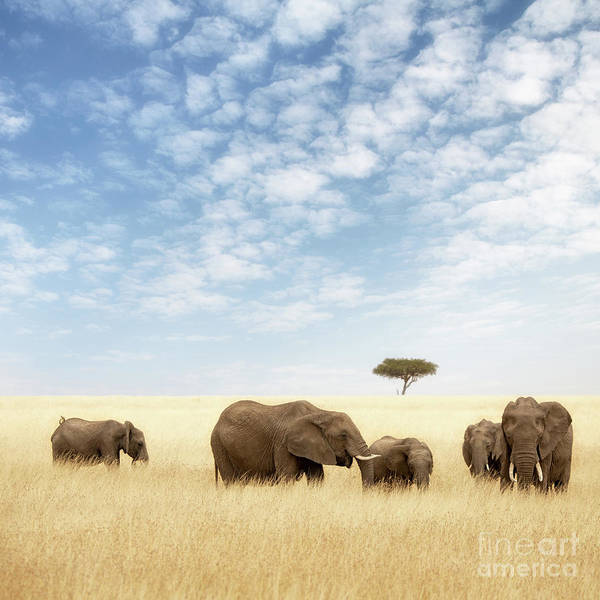 Wall Art - Photograph - Elephant Group In The Grassland Of The Masai Mara by Jane Rix