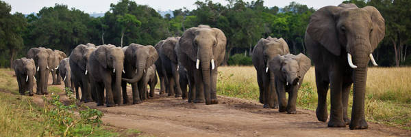 Wall Art - Photograph - Elephant Herd Walking Out Of The Forest by Manoj Shah
