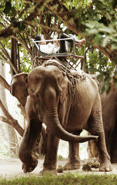 Chiang Mai Province Photograph - Elephant In Chiang Mai by Michael Marquand