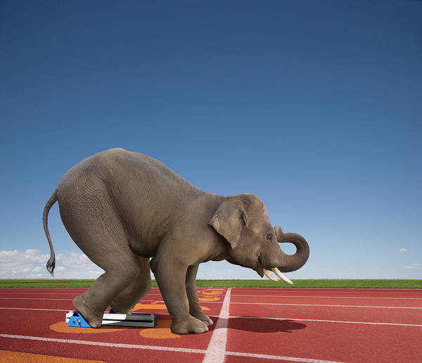 Out Of Context Photograph - Elephant In The Starting Blocks by John Lund