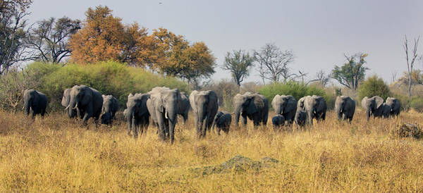 Photograph - Elephant Line by John Rodrigues