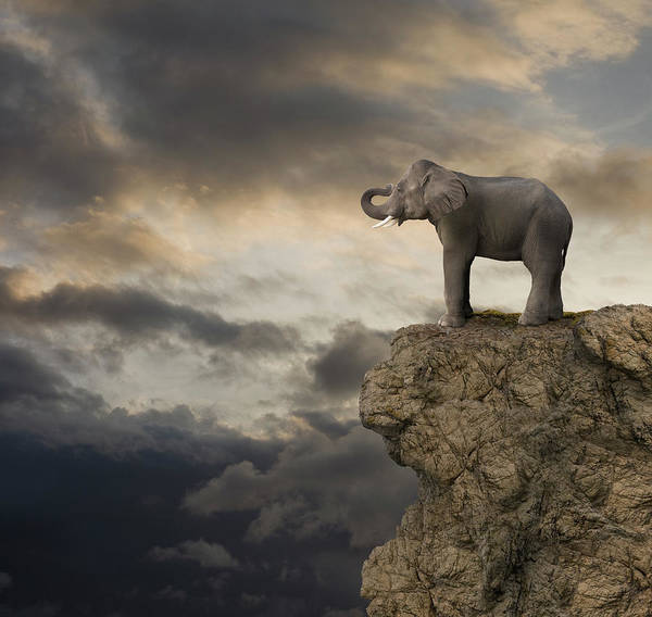 Sausalito Wall Art - Photograph - Elephant On The Edge Of A Cliff by John Lund