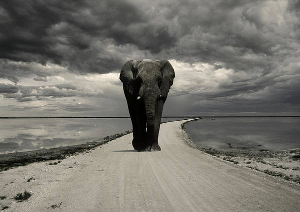 Storm Photograph - Elephant On The Road, Etosha National by Franz Aberham