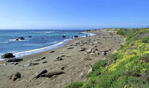 Wall Art - Photograph - Elephant Seals, Pismo Beach, California by Lyuba Filatova