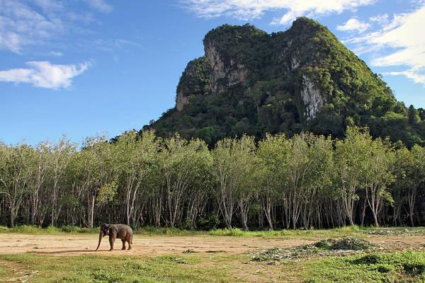 Thailand Photograph - Elephant Trekking Camp, Krabi, Thailand by Anik Messier