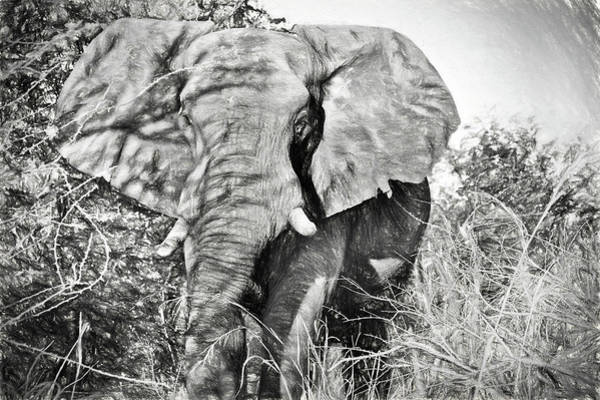 Photograph - Elephant Up Close In Black And White by Kay Brewer