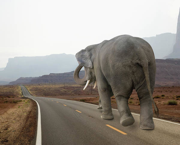 Urban Wildlife Photograph - Elephant Walking Down A Long And Empty by John Lund