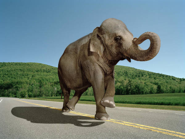 Out Of Context Photograph - Elephant Walking Down The Straight Line by Matthias Clamer