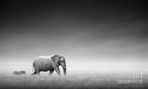 Wall Art - Photograph - Elephant With Zebra Behind On Open by Johan Swanepoel