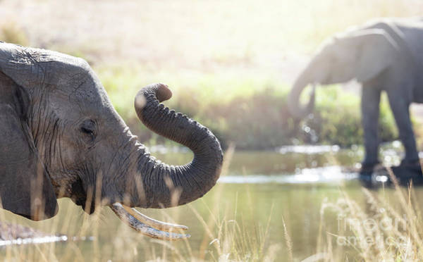Wall Art - Photograph - Elephants At A Watering Hole by Jane Rix