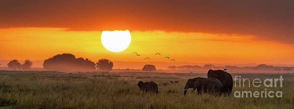 Amboseli Wall Art - Photograph - Elephants At Sunrise In Amboseli, Horizonal Banner by Jane Rix
