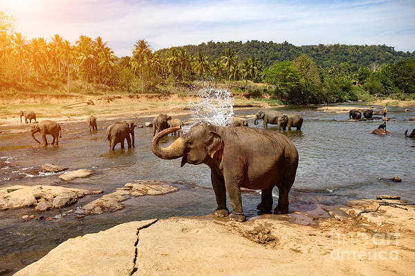 Camp Wall Art - Photograph - Elephants Bathing In The River by Travel Landscapes