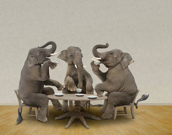 Republican Party Photograph - Elephants Having Tea Party by John M Lund Photography Inc