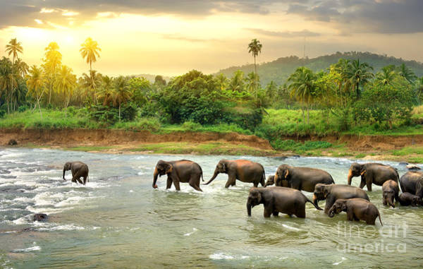 Reserve Wall Art - Photograph - Elephants In River by Givaga