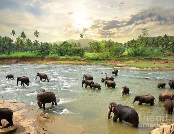 Wall Art - Photograph - Elephants In Water by Givaga