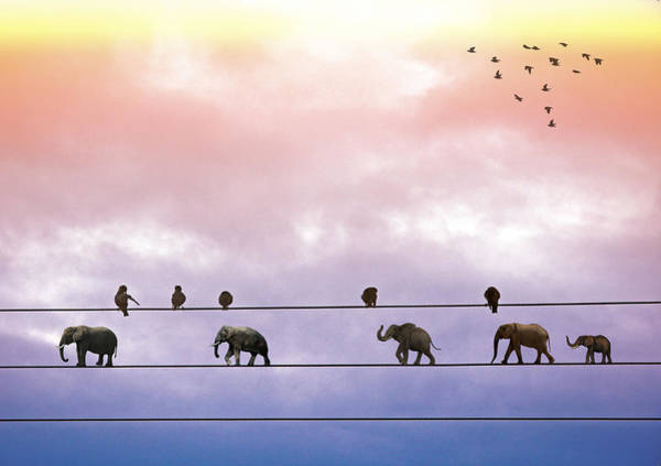 Digital Art - Elephants On The Wires by Alex Mir