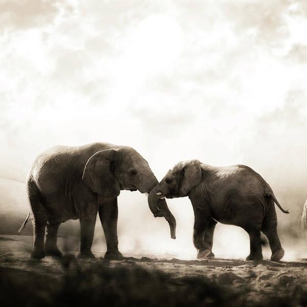 Dust Photograph - Elephants Playing by Fotografias De Rodolfo Velasco