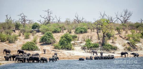 Wall Art - Photograph - Elephants by Timothy Hacker