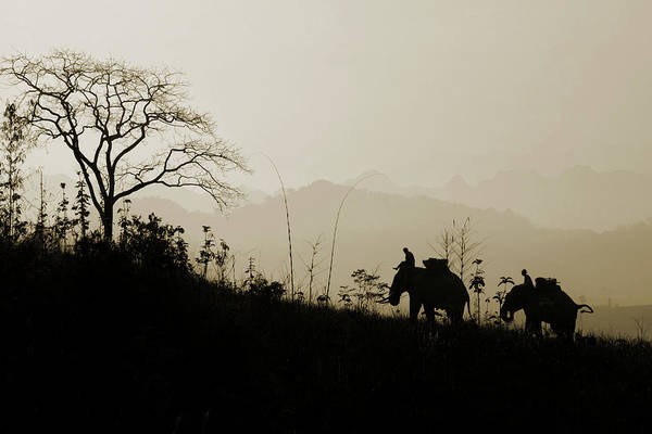 Indian Culture Photograph - Elephants Trekking by Shutterworx