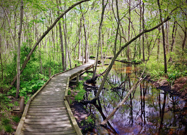 Wall Art - Photograph - Elevated Nature Trail Pano by Brian Wallace