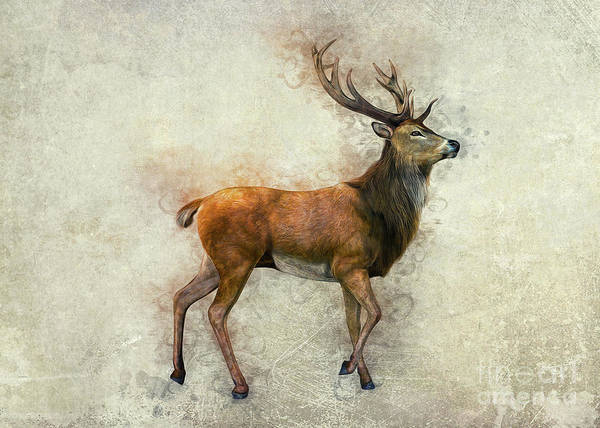 Digital Art - Elk Art by Ian Mitchell