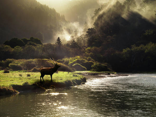 Photograph - Elk In Sinkyone Wilderness by Leland D Howard