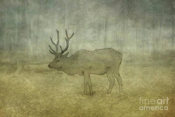 Wall Art - Digital Art - Elk In The Wild Sketch by Randy Steele